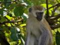 monkey-3816926_1280